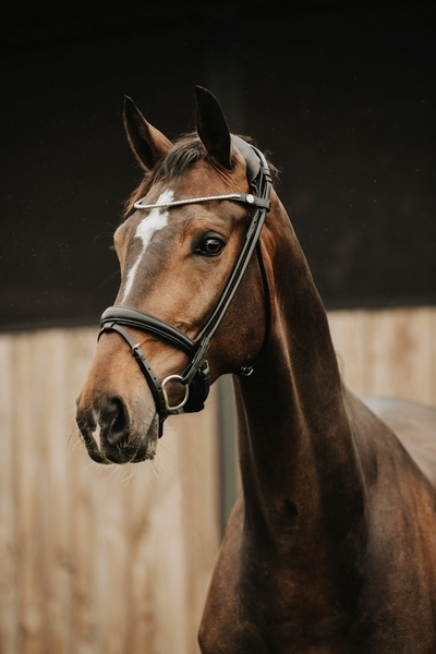 FinesseBridles trense jumping model